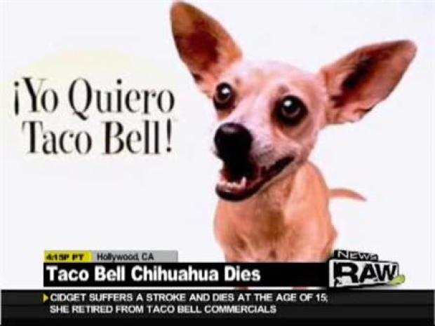 Old Taco Bell Dog Name
