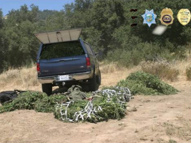 Feds Offer Peek at $100M Pot Bust