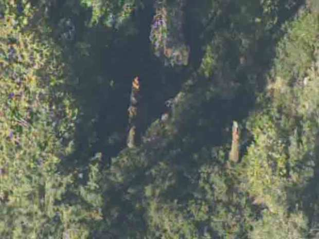 [BAY] RAW VIDEO: Plane Crashes Near Emigrant Gap