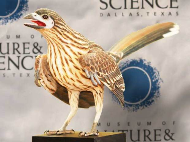 Rare Bird Fossil Found
