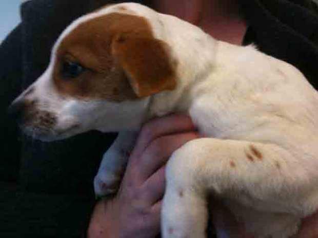 Marin's New Dog Rescue Center in Photos