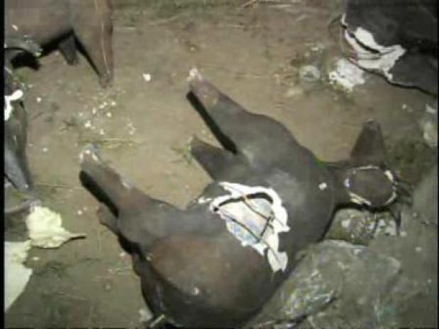 [LA] Donkey Statues Hide Drugs (RAW)