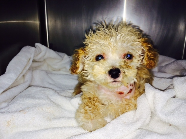 "[BAY] ""Thrown Away"" Puppy  Found in Recycling Center"