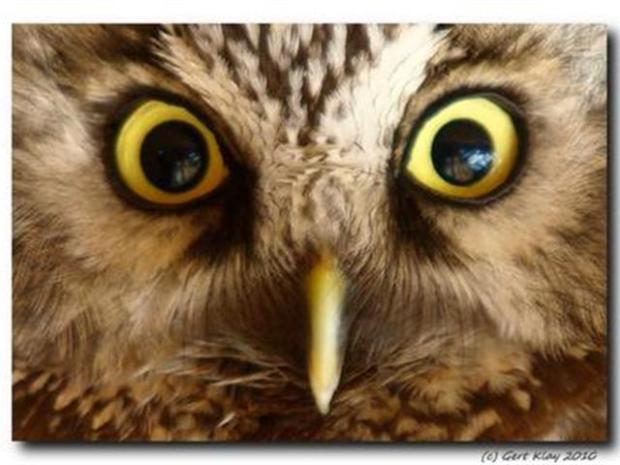[BAY] SJ Tree Trimmers Displace Owlets