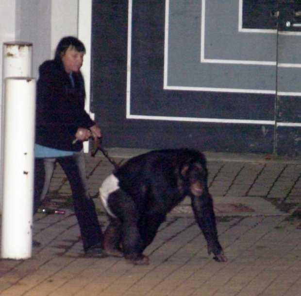 Pet Chimp Killed After Attacking Woman