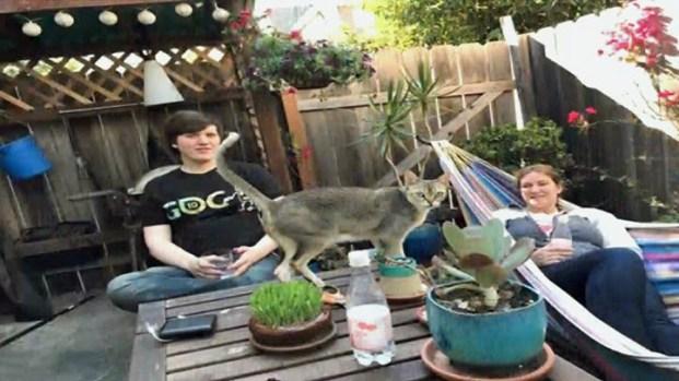 [BAY] Police Identify Couple Found Dead Inside Berkeley Apartment