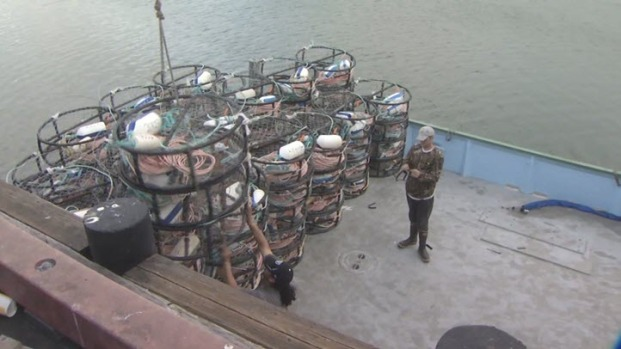 [BAY] Eager Fishermen Prepare for Start of Long-Delayed California Crab Season
