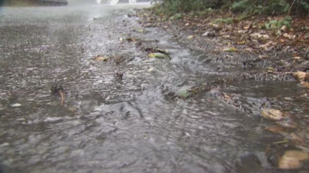 [BAY] Bay Area Residents Welcome Wet Weather