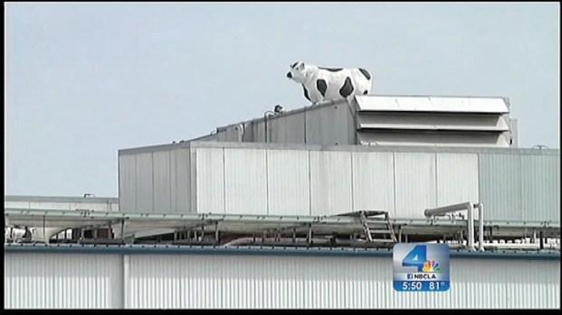 """[LA] CA Slaughter House Shuttered For """"Several Humane Handling Violations"""""""