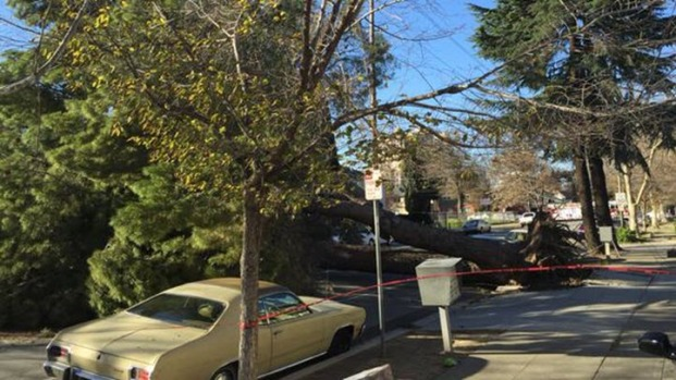 High Winds Knock Down Trees in Bay Area