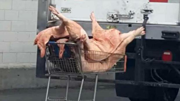 [BAY] 2016 Photo Captures Raw Meat in Shopping Carts at SJ Grocery