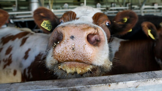 [BAY] Raw Video: USDA Reacts to Mad Cow Finding