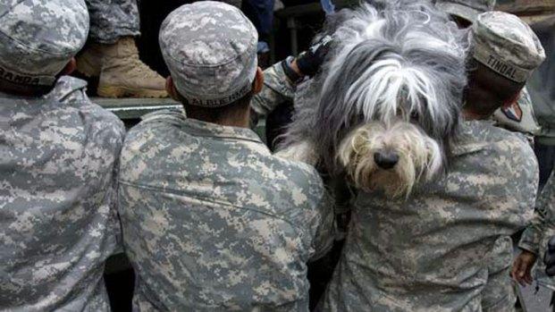 Sandy: Animal Survivors Images
