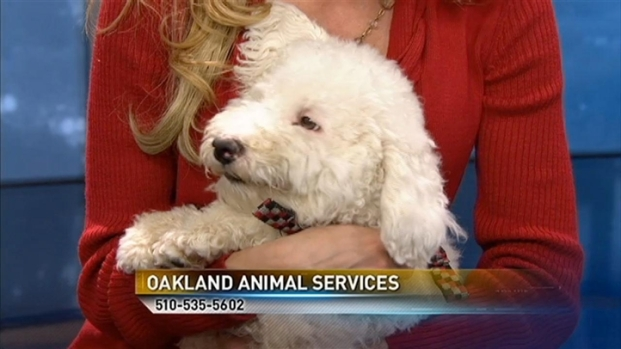 [BAY] Bay Area Proud Pets: Austin