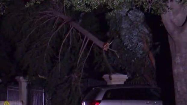 Debris Strewn Across South Bay After Wind Storm