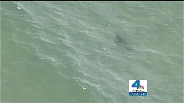 [LA] Lifeguards Advise Caution to Beachgoers After Shark Sighting Near Manhattan Beach