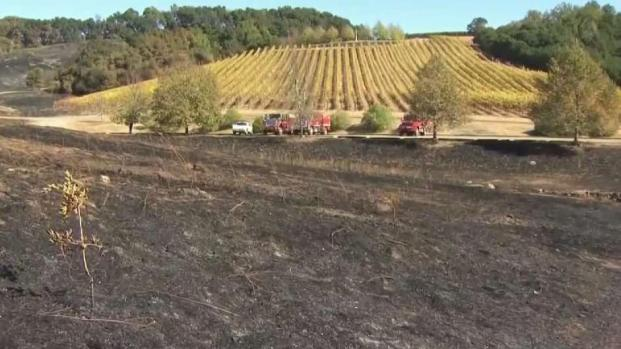 [BAY] Many Vineyards Serve as Fire Breaks in Sonoma County Blaze