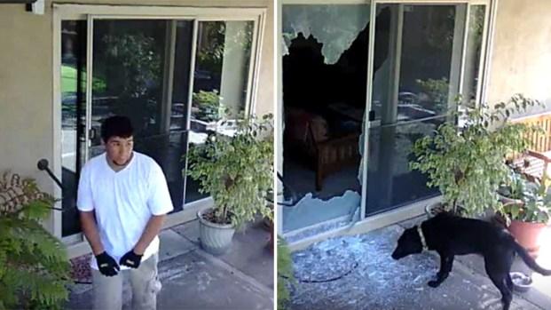 [BAY] Police: Burglars Fed Family Dog Broken Glass