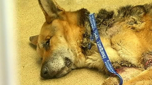 [BAY] Abused Dog Dumped at Shelter