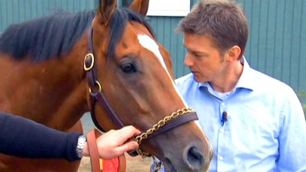 [NY] Bracket Picks From Coach Pitino's Horse