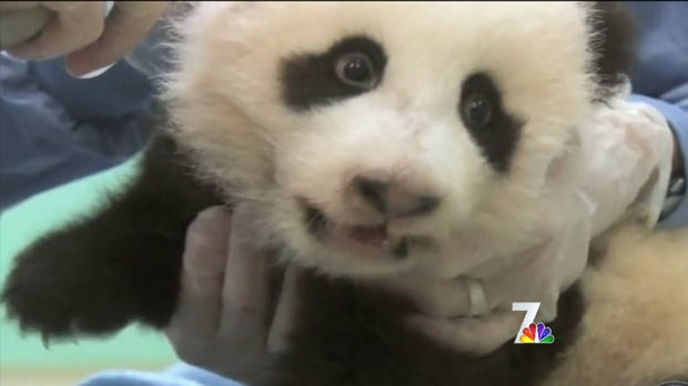 [DGO] Pandaholics Flock to Panda Naming Ceremony