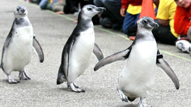 San Francisco Zoo's Cutest Critters