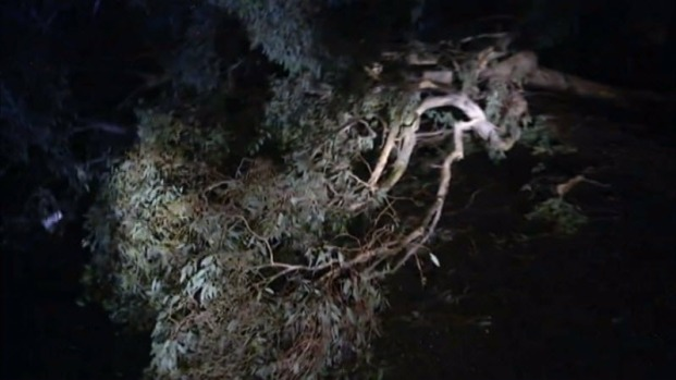 Rig Carrying Wastewater Crashed Into Downed Eucalyptus Tree
