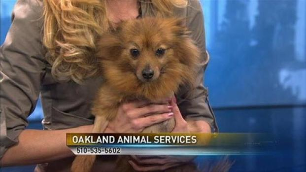 [BAY] Bay Area Proud Pets: Scarlett