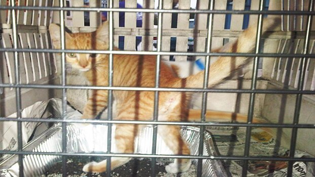 Gulf Animals Arrive at SPCA of Texas