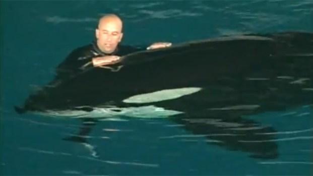 [DGO] Video Details Orca Attack