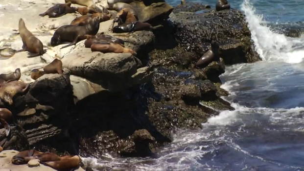 [DGO] La Jolla Cove Cleanup