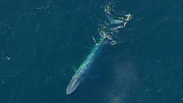 Whales Spotted Off Del Mar Coast