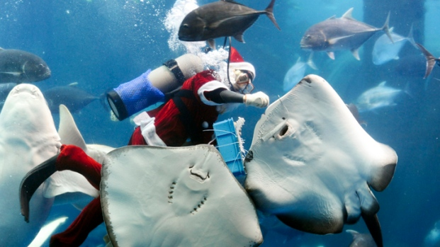 Christmas Scenes From Around The World