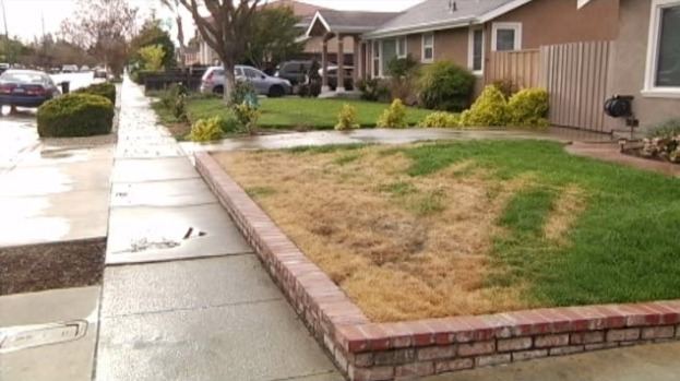 [BAY] Dozens of Poisoned Lawns Reported in San Jose