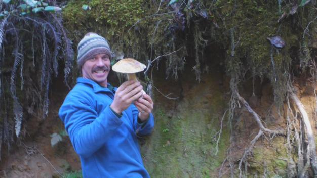 Rainy Weather a Boon for Mushroom Hunters
