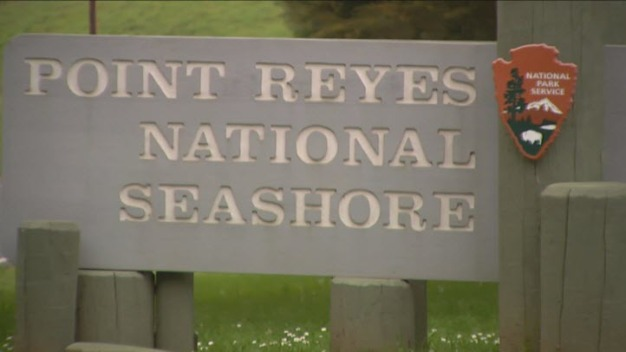 Lawsuit Brings Out Environmentalists on Both Sides of Debate Over Cattle Ranching at Point Reyes