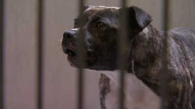 Dogs at Center of Animal Abuse Case Looking for New Homes