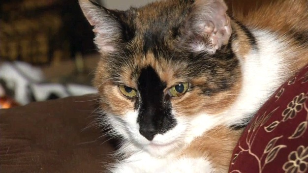 World's Oldest Cat May Be 29-Year-Old Feline From Tennessee