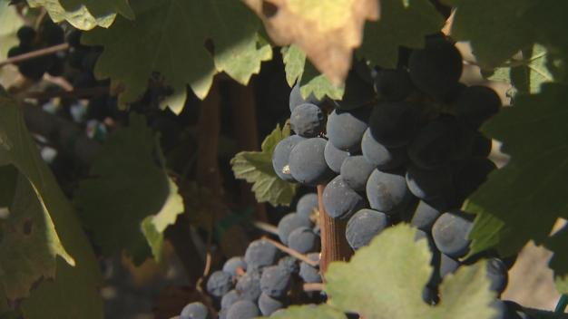Arrest in Theft Scheme Involving 3 Napa Wineries