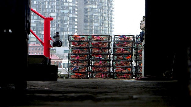 Crab Industry Fights for Survival Under New Rules