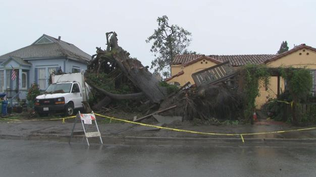 A Tree Crashes into Two Homes