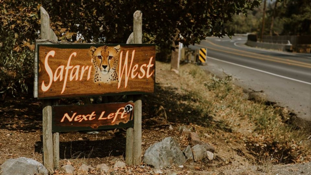 Safari West in Santa Rosa Reopens After North Bay Fires