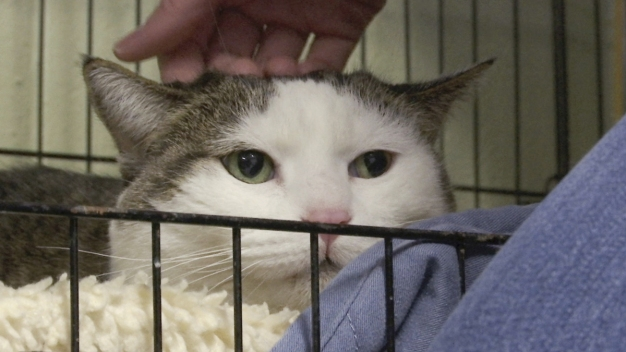 Mich. Group Finds New Homes for Pets in Their 'Golden Years'
