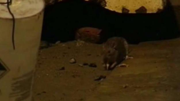 Bay Area Cities on 'Rattiest' Cities List