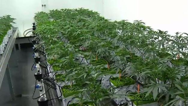 Marin County Marijuana Rules