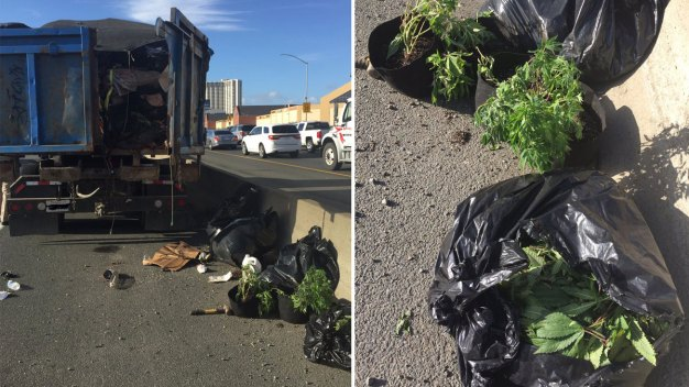 Driver Cited After Spilling Bags of Weed Plants on Freeway