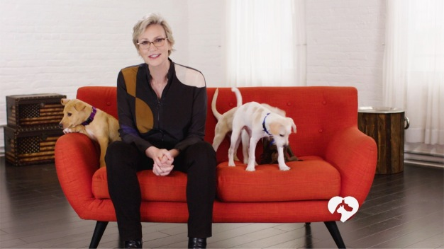 WATCH: Jane Lynch Hosts 'Clear the Shelters' Special