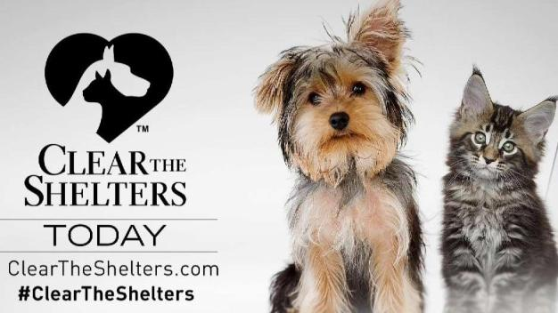 Clear the Shelters is TODAY! Help Animals Find Forever Homes