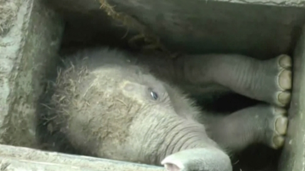 Wildlife Crew in Sri Lanka Rescues Elephant Calf Wedged in Drain