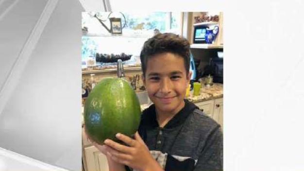 Hawaiian Family Grows World's Heaviest Avocado